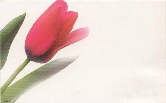Floral Enclosure Card - tulip