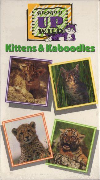 Kittens & Kaboodles